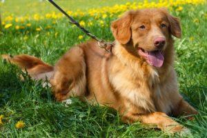 Dog adoption 2