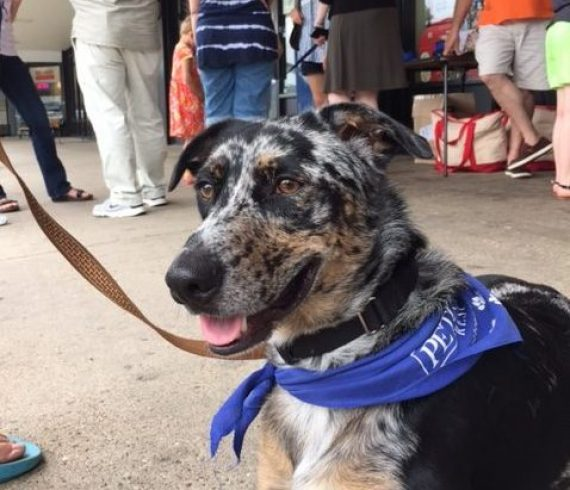 Dog adoption scarf