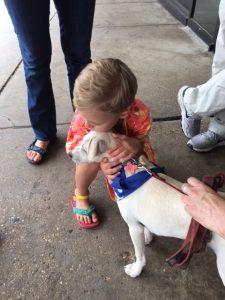 Dog adoption 2017