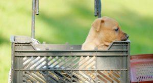 Dog adoption puppy basket